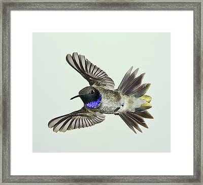 Framed Print featuring the photograph Quick Violet by Gregory Scott