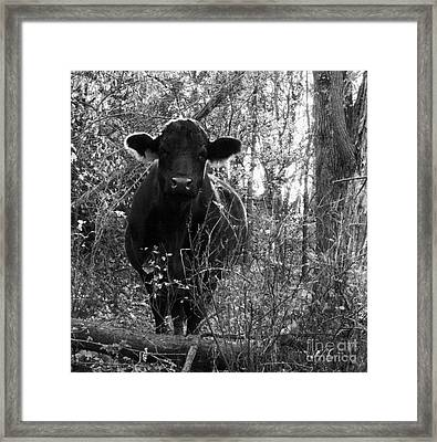 Quiet Companion Framed Print by J L Zarek