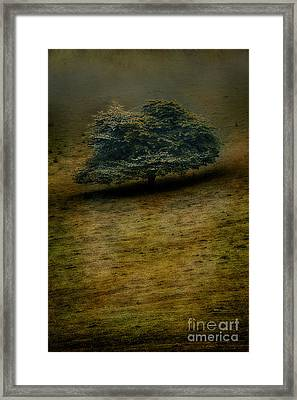 Quiet Lonliness Of The Blue Ridge Framed Print by Dan Carmichael