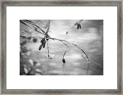 Framed Print featuring the photograph Quiet Moment #2 by George Mount