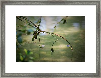 Framed Print featuring the photograph Quiet Moment by George Mount