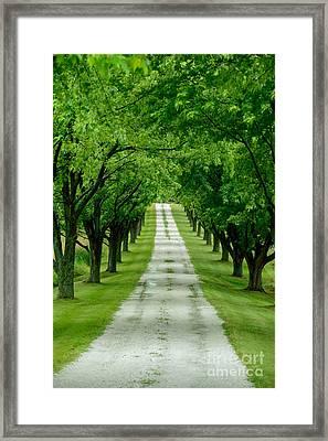Quiet Path Between Trees Framed Print