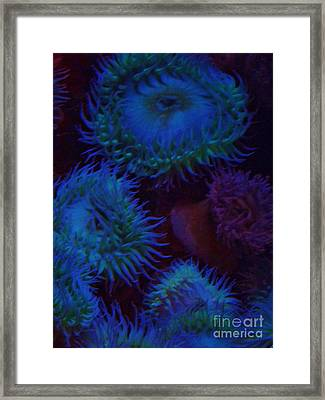 Framed Print featuring the photograph Quiet Undersea World by Brigitte Emme