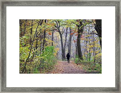 Quiet Walk In The Woods Framed Print