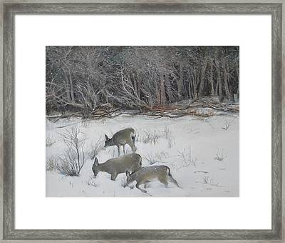 Quiet Winter Day  Framed Print by Terri Ana Stokes
