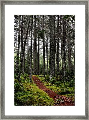 Quiet Woods Framed Print
