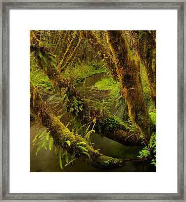 Quinault Rain Forest Framed Print by Leland D Howard