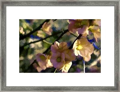 Quince Blossoms Framed Print by John K Woodruff