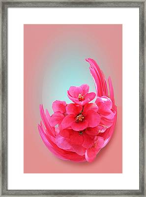 Quince Floral Abstract Framed Print by Linda Phelps