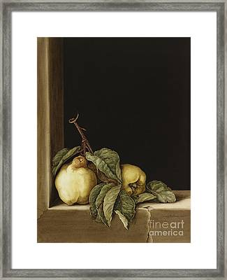 Quinces Framed Print by Jenny Barron