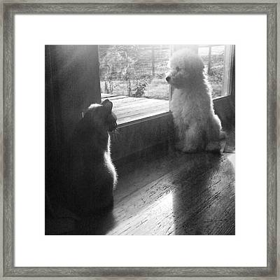 Quincy And Georgie In The Framed Print by Blenda Studio
