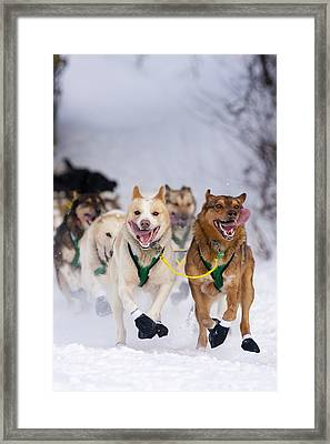 Quinn Iten Lead Dogs Running On Long Framed Print
