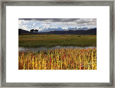 Quinoa The Andean Cereal Framed Print by James Brunker