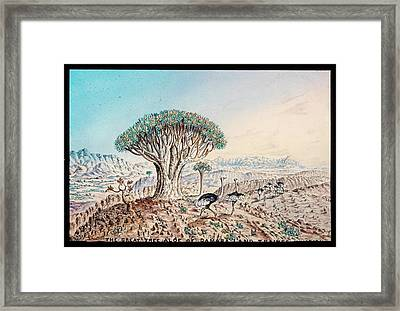 Quiver Tree And Ostriches Framed Print