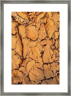Quiver Tree Bark Framed Print