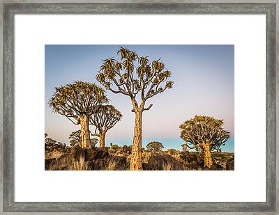 Quiver Tree Sunset - Namibia Africa Photograph Framed Print by Duane Miller