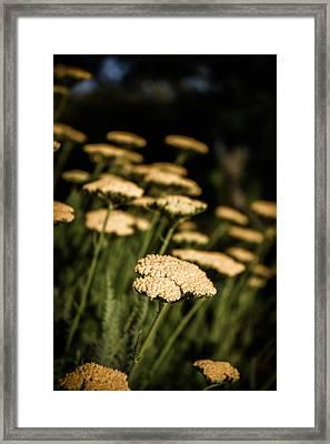 Quivering Yarrow Framed Print by Dave Garner