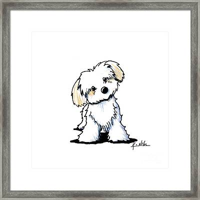 Quizzical Havanese Framed Print by Kim Niles