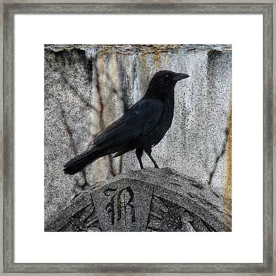 R Is For Raven Framed Print by Gothicrow Images