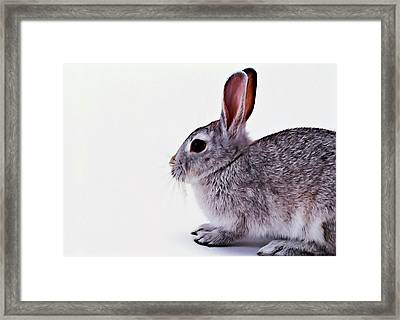 Rabbit 1 Framed Print by Lanjee Chee