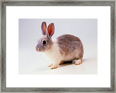 Rabbit 2 Framed Print by Lanjee Chee