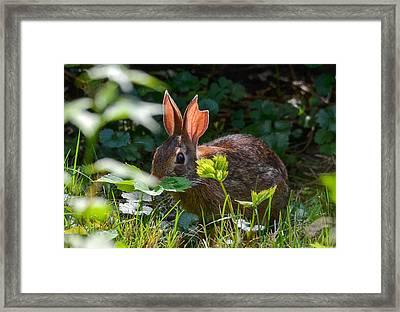 Rabbit Ears Framed Print