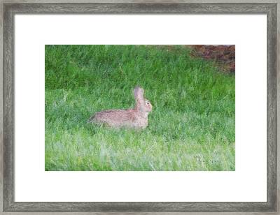 Rabbit In The Grass Framed Print by Michael Stowers
