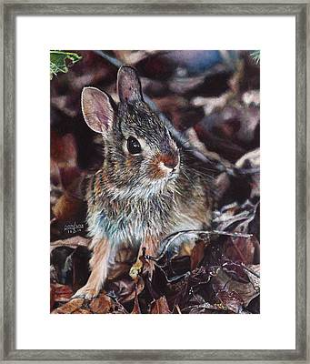 Rabbit In The Woods Framed Print