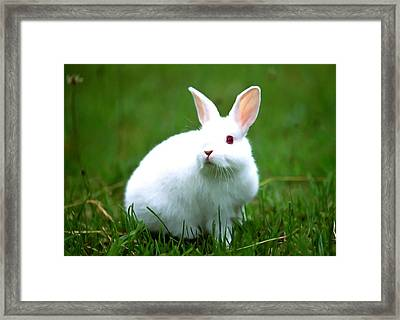 Rabbit On Grass Framed Print by Lanjee Chee
