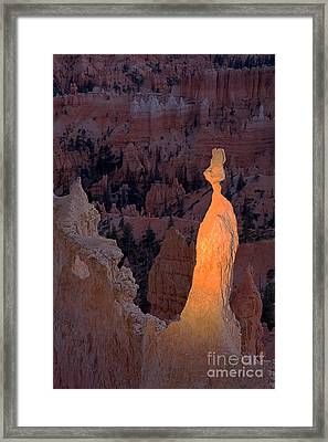 Rabbit Sunset Point Bryce Canyon National Park Framed Print