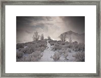Rabbit Tracks Framed Print by Michael Van Beber