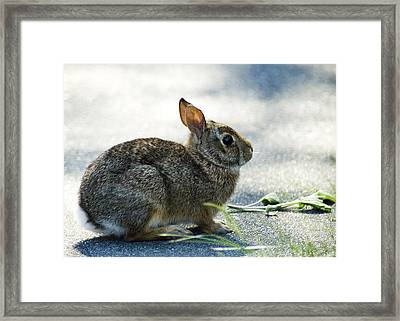 Framed Print featuring the photograph Rabbit by Yulia Kazansky