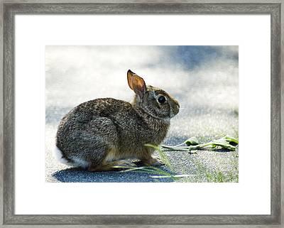 Framed Print featuring the photograph Rabbit by Yulia Kazansky