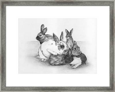Rabbits Rabbits And More Rabbits Framed Print by Nan Wright