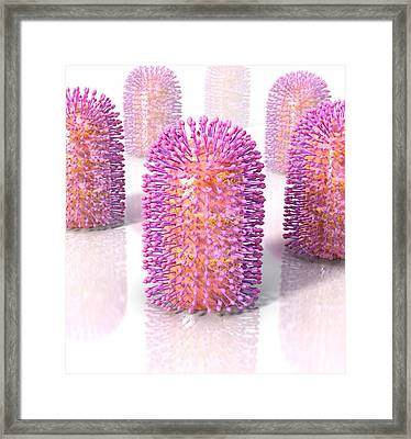 Rabies Virus, Artwork Framed Print by Science Photo Library