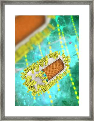 Rabies Virus Particle Framed Print by Ramon Andrade 3dciencia