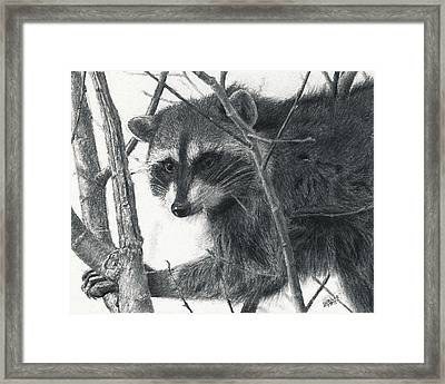 Raccoon - Charcoal Experiment Framed Print by Joshua Martin
