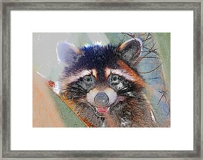 Raccoon Face Framed Print by David Lee Thompson