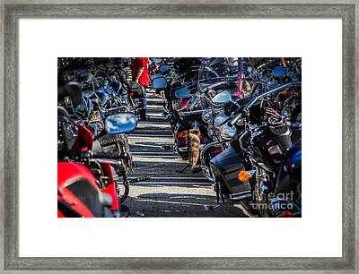 Framed Print featuring the photograph Raccoon Tail by Eleanor Abramson