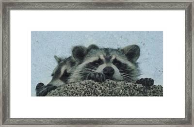 Raccoons Painterly Framed Print by Ernie Echols