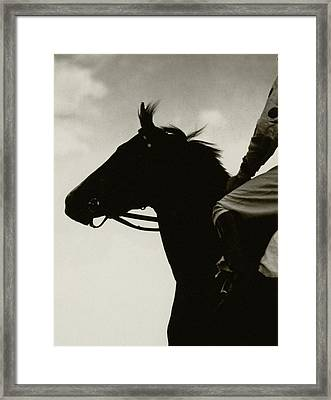 Race Horse Gallant Fox Framed Print