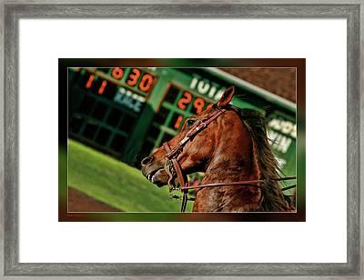 Race Horse Head Shot Framed Print