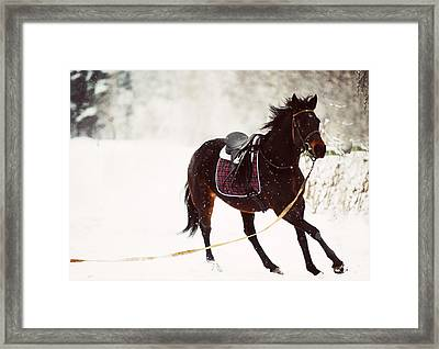Race In The Snow 3 Framed Print