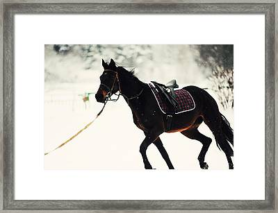 Race In The Snow 4 Framed Print