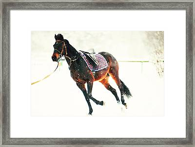 Race In The Snow 5 Framed Print