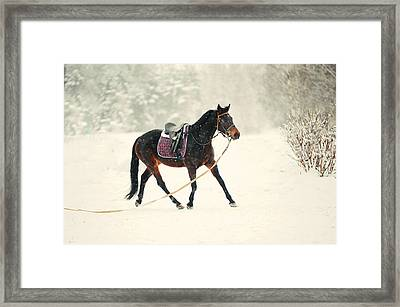Race In The Snow 6 Framed Print