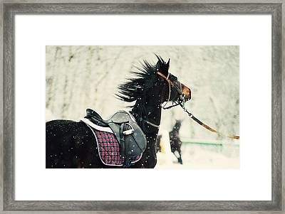 Race In The Snow 7 Framed Print