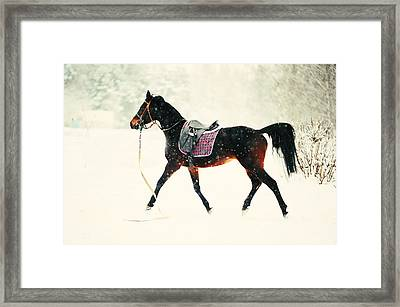 Race In The Snow 8 Framed Print