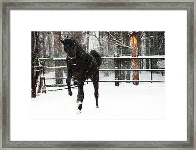 Race In The Snow 9 Framed Print