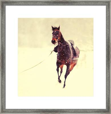 Race In The Snow Framed Print by Jenny Rainbow